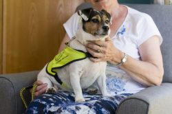 PAT_Dogs_Jack Russell 3_2016
