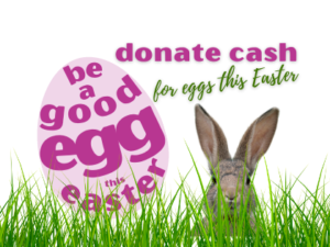 Website Home Page Listing Donate Cash for Eggs this Easter